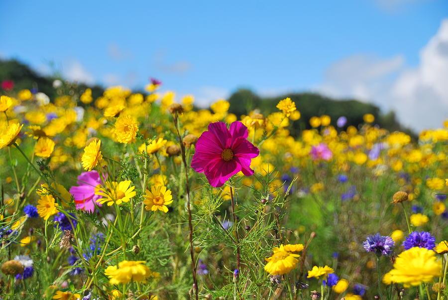 Wild Flowers Photograph - Flowers In The Field by Stewart Geddes