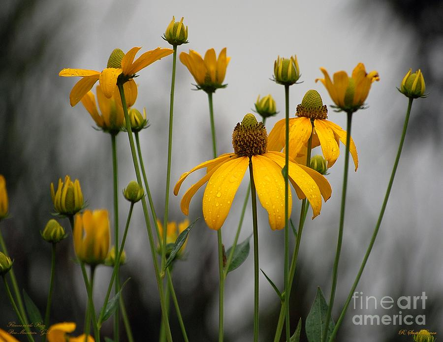 Flowers In The Rain Photograph - Flowers in the rain by Robert Meanor