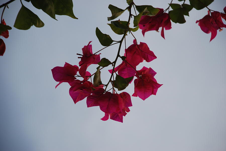 Flowers Photograph - Flowers In The Sky by Rob Hans