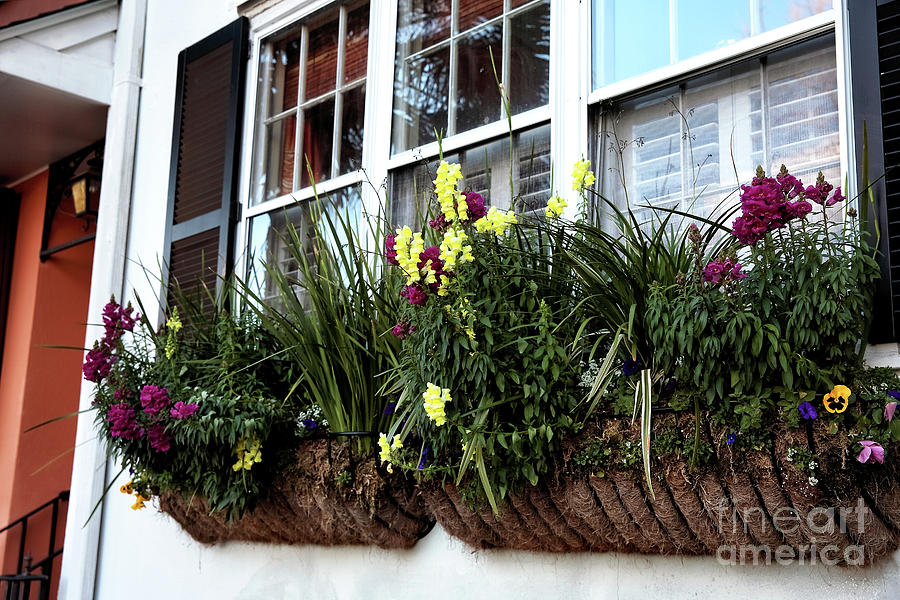 Flowers Photograph - Flowers In The Window by John Rizzuto