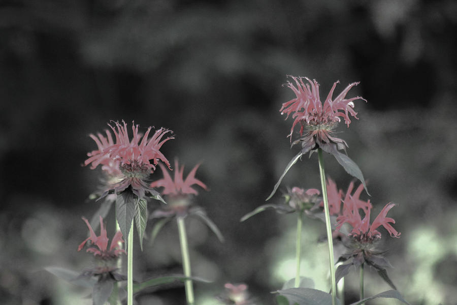 Flowers Photograph - Flowers by Julien Boutin