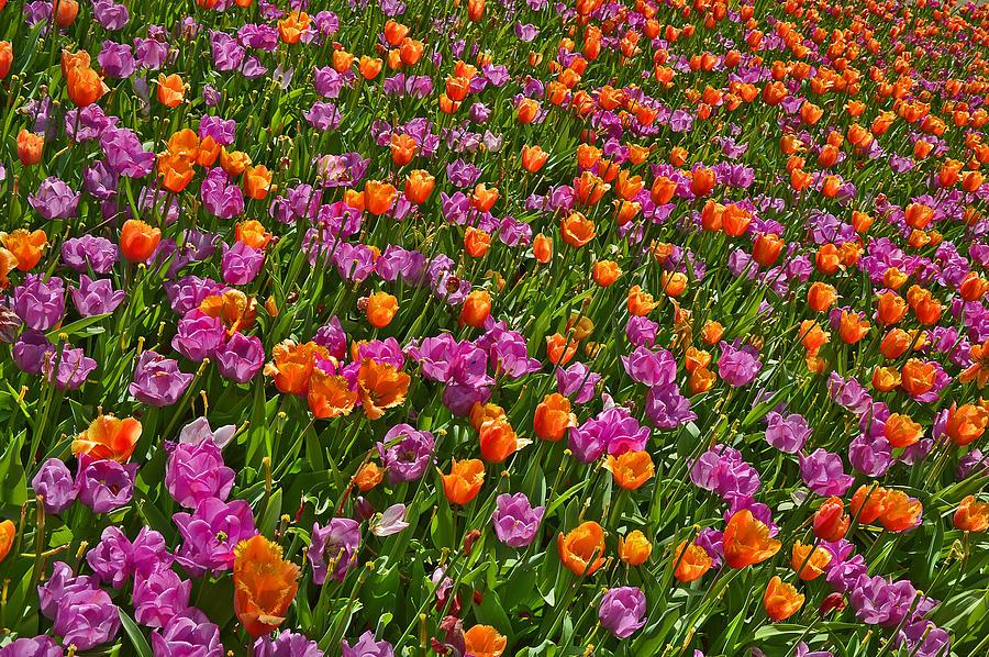 Flowers. Koblenz. Germany. Photograph