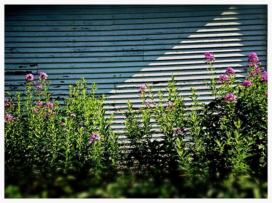 Illinois Photograph - Flowers Line-up by Frank J Casella