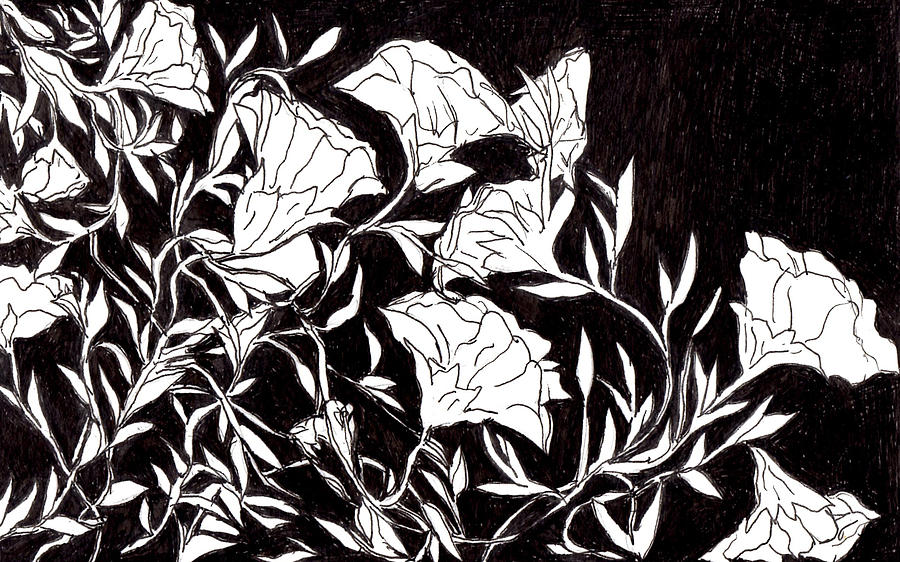 Nature Drawing - Flowers by Lou Belcher