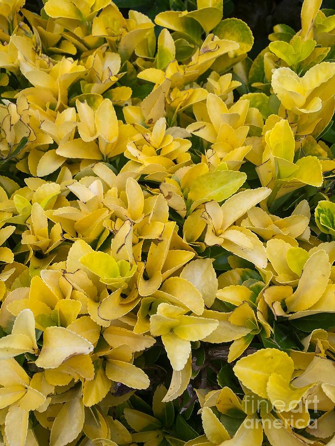 Appian Way Photograph - Flowers Of Domitilla by Joseph Yarbrough