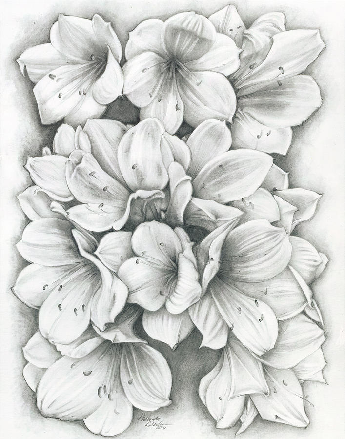 Clivia Flowers Pencil by Melinda Blackman