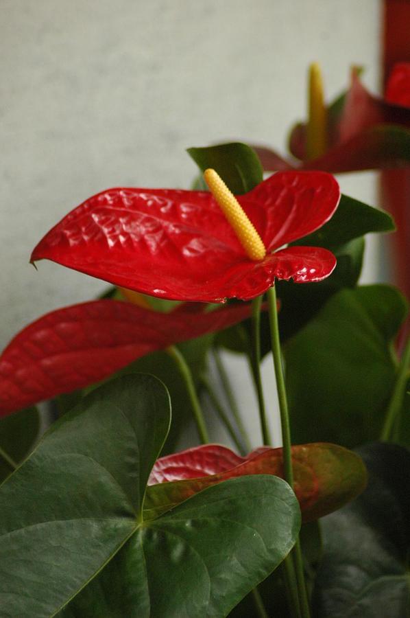 Foliage Photograph - Flowers Rising by Lori Mellen-Pagliaro