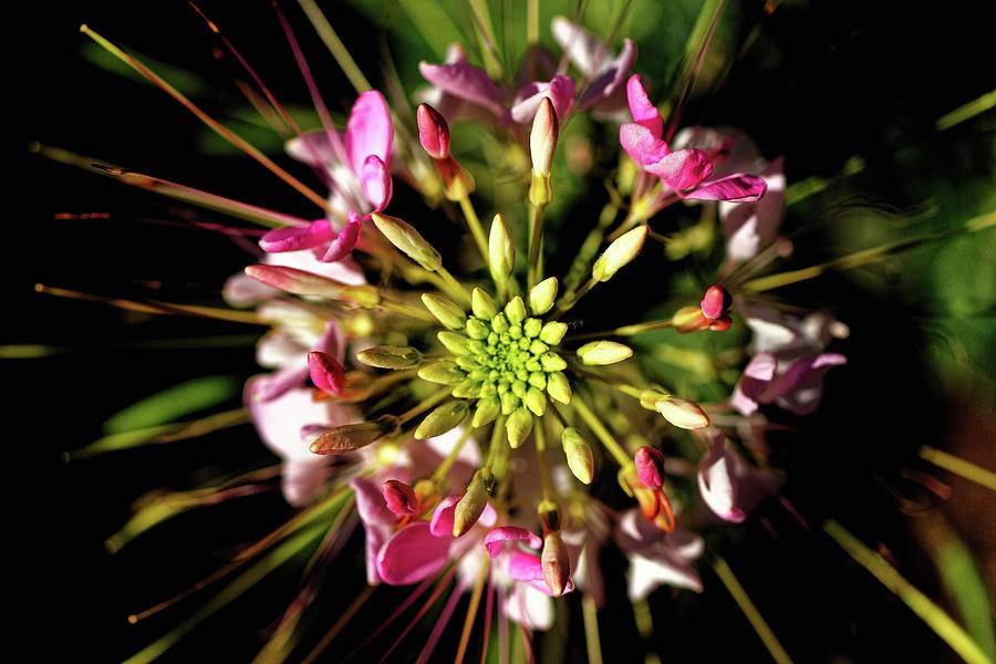 Flower Photograph - Flowerworks by Hubert DESCAMPS