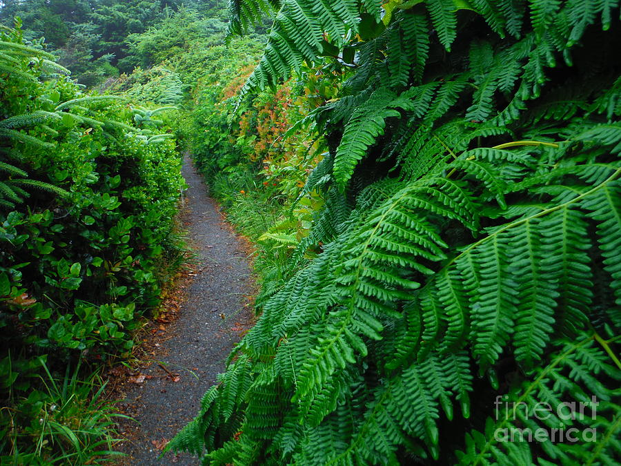 Flowing Ferns Of The Oregon Trail by Paddy Shaffer