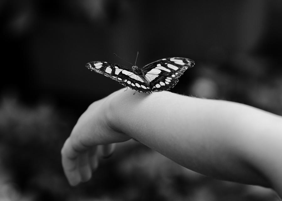 Butterfly Photograph - Fly Away by Edward Myers
