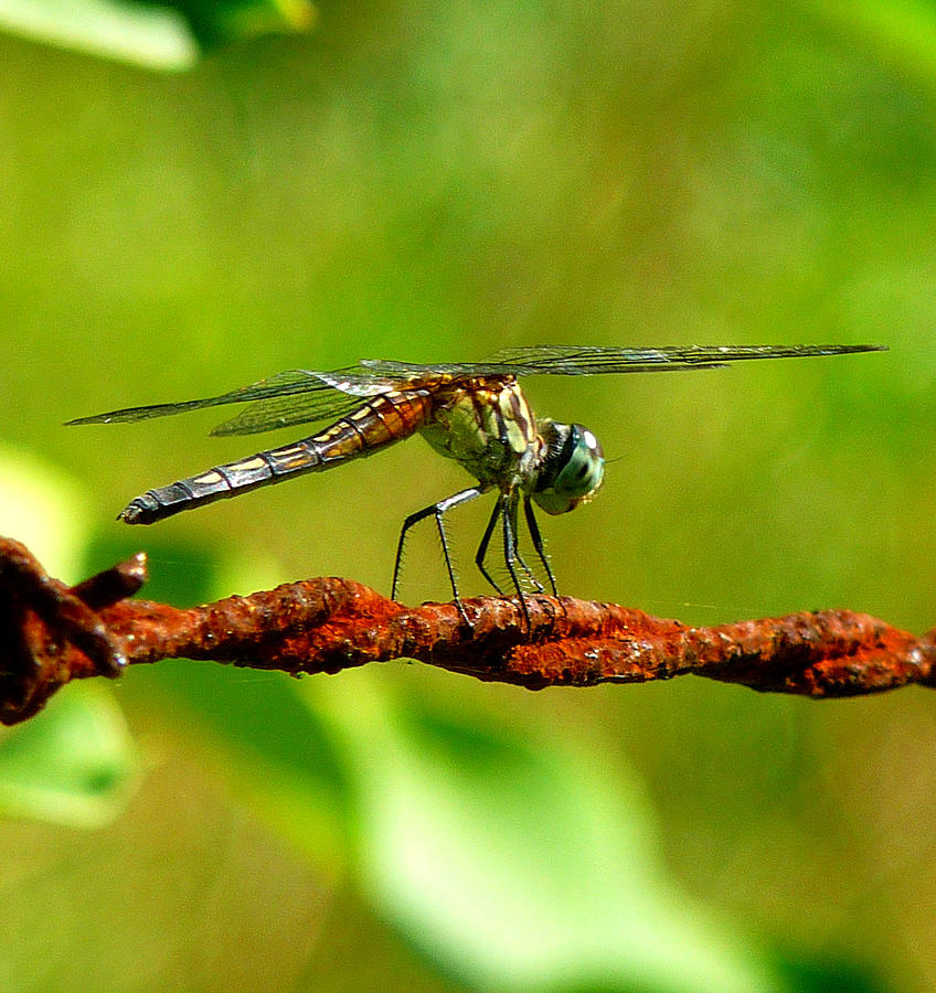 Dragonfly Photograph - Fly Away by Stephanie Parks