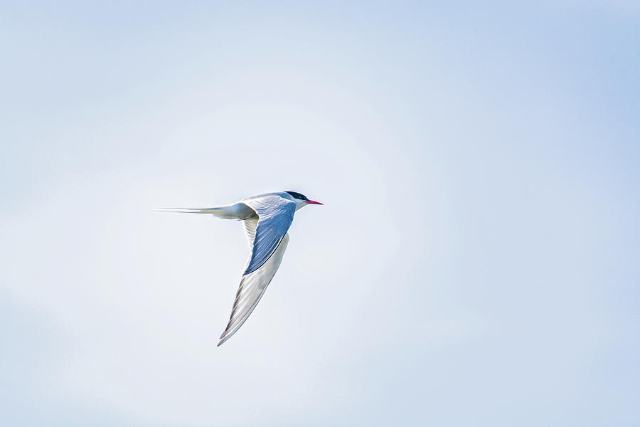 Alaska Photograph - Fly-By by Emily Bristor