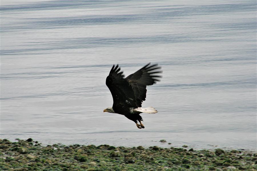 Fly Photograph - Fly Like An Eagle by Glenn Wachtman