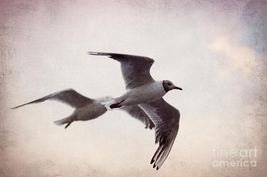 Gull Photograph - Flying by Angela Doelling AD DESIGN Photo and PhotoArt