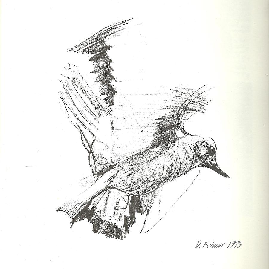 Flying Bird Sketch Drawing By Denise Fulmer