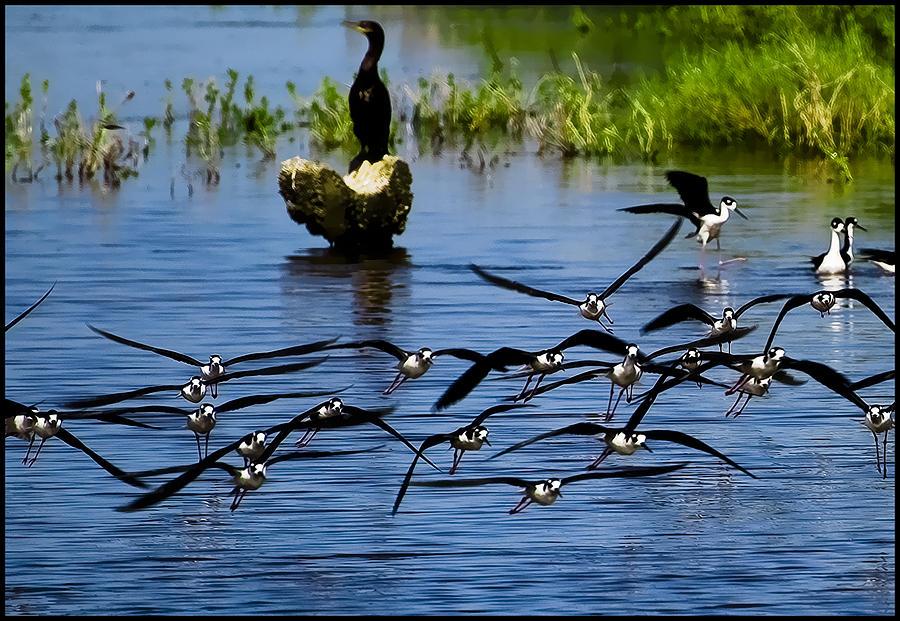 Flying Photograph - Flying Birds by Galeria Trompiz