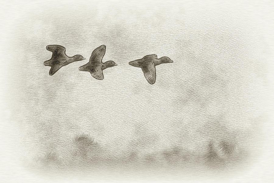 Duck Digital Art - Flying Ducks by Pablo Rodriguez Merkel