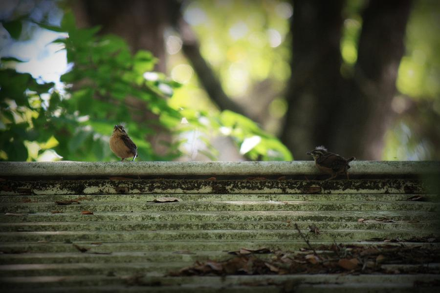 Baby Bird Photograph - Flying Lessons by Mandy Shupp