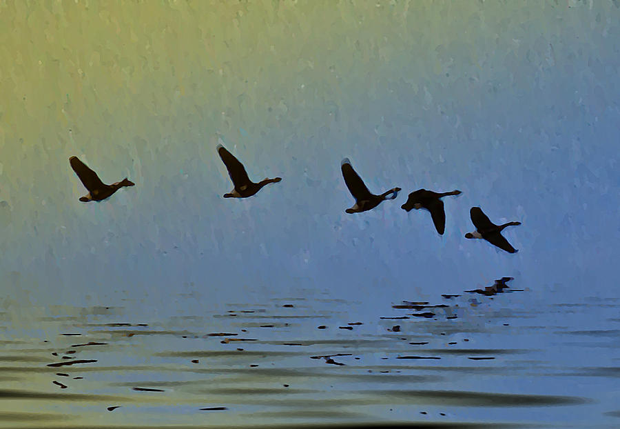 Duck Photograph - Flying Low by Bill Cannon