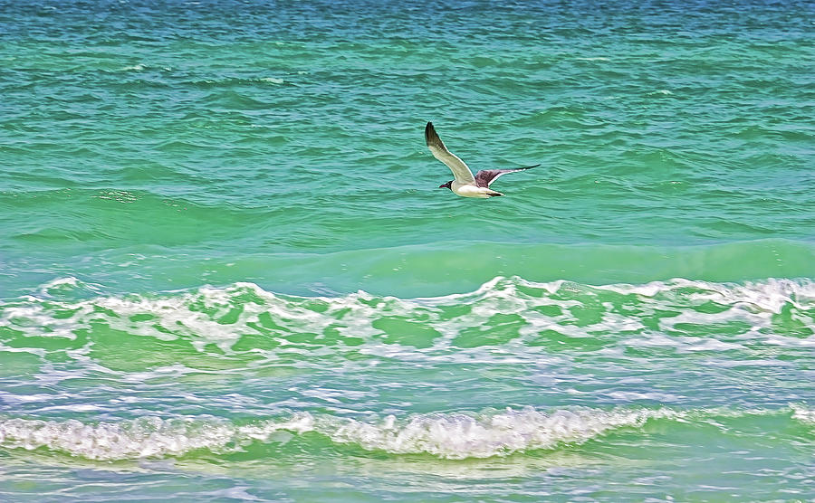 Gulf Of Mexico Photograph - Flying Solo by HH Photography of Florida