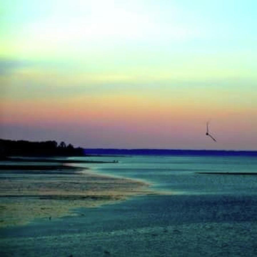 Plymouth Harbor Photograph - Flying Solo by Roberta Trabish