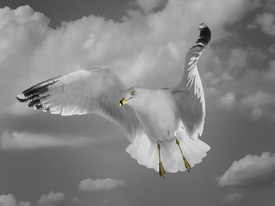 Bird Photograph - Flying Solo by Steven  Michael