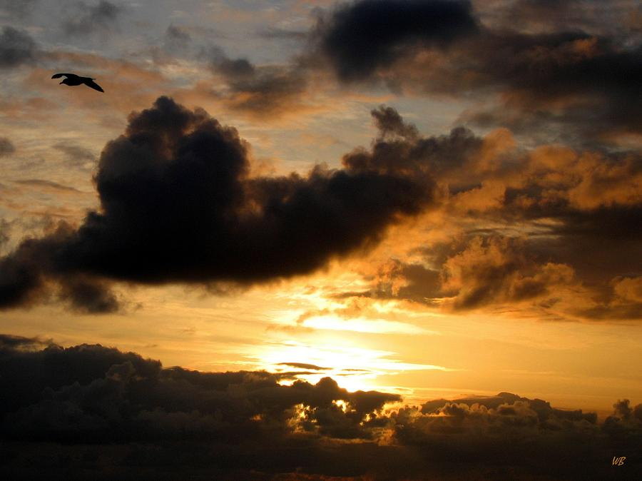 Seagull Photograph - Flying Solo by Will Borden