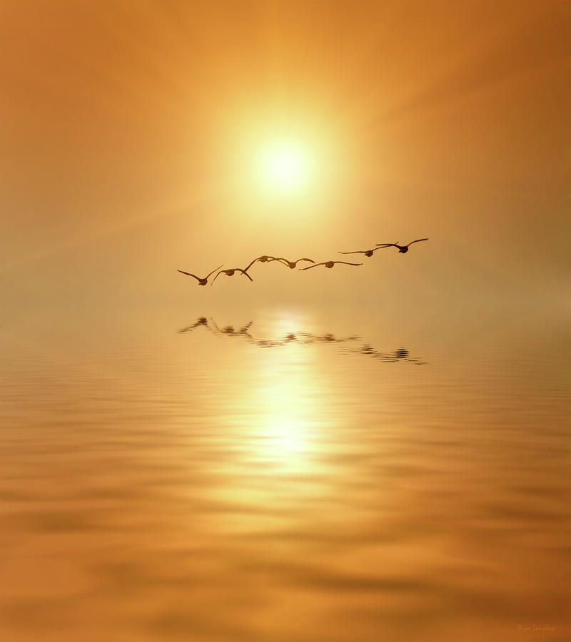 Birds Photograph - Flying South by Wim Lanclus