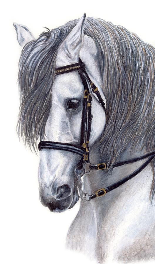 Horse Drawing - Focus by Kristen Wesch