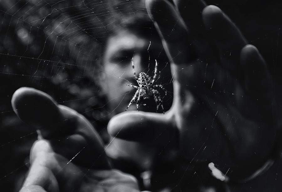 Spiders Photograph - Focus by Mario Pejakovic