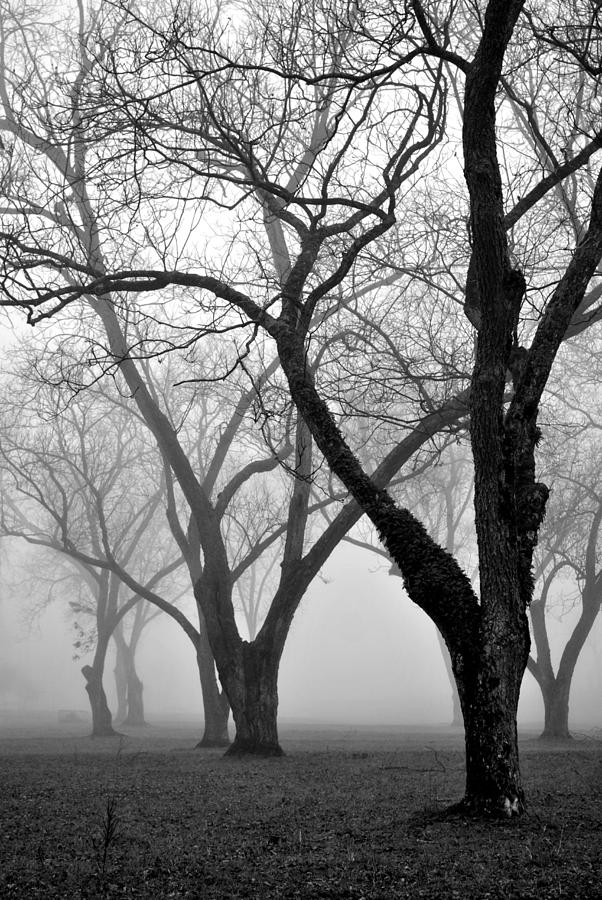 Landscape Photograph - Fog 1 by Beverly Hammond