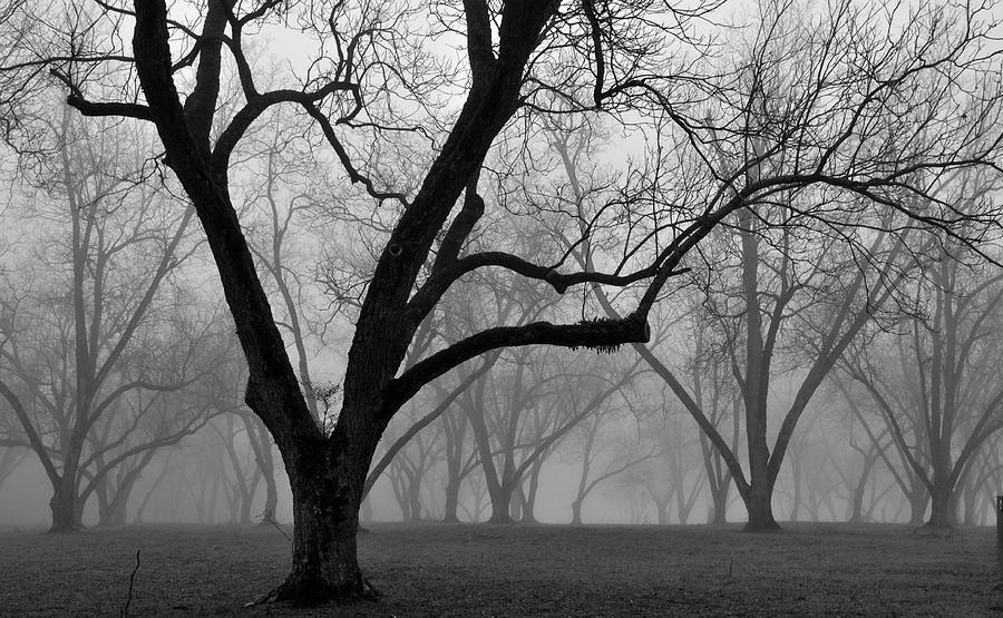 Fog Photograph - Fog 2 by Beverly Hammond
