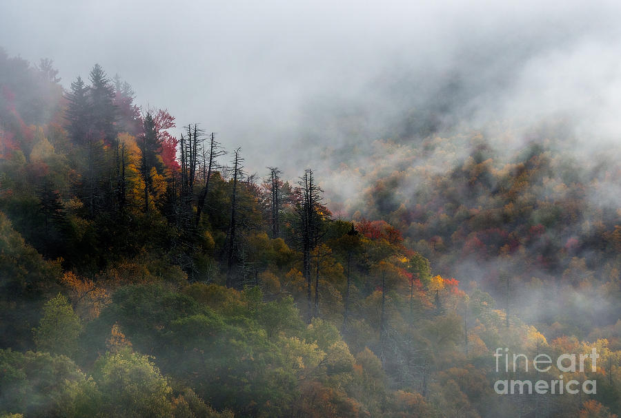 Landscape Photograph - Fog And Color. by Itai Minovitz
