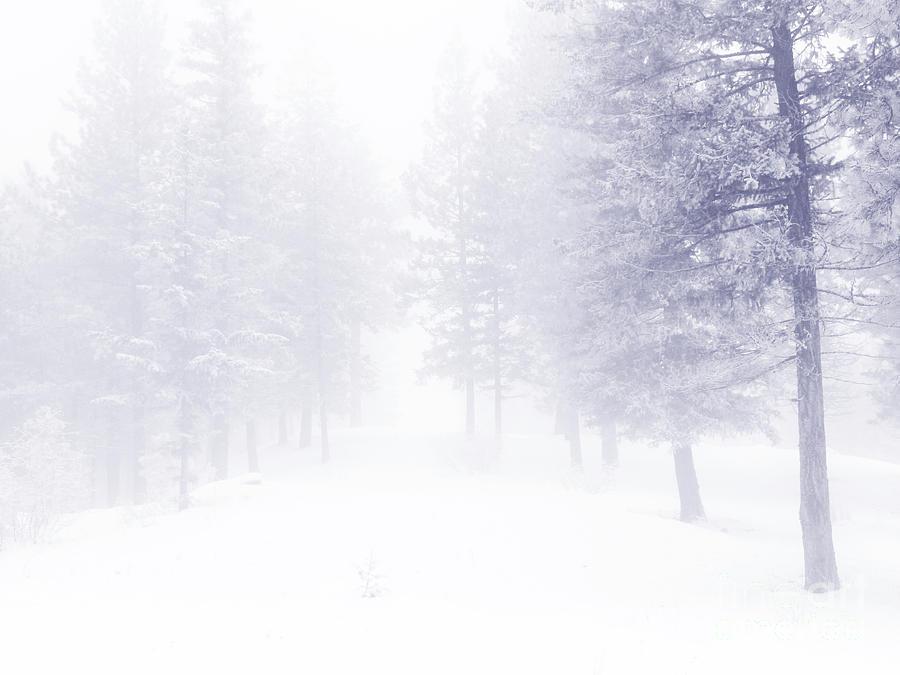 Trees Photograph - Fog And Snow by Tara Turner