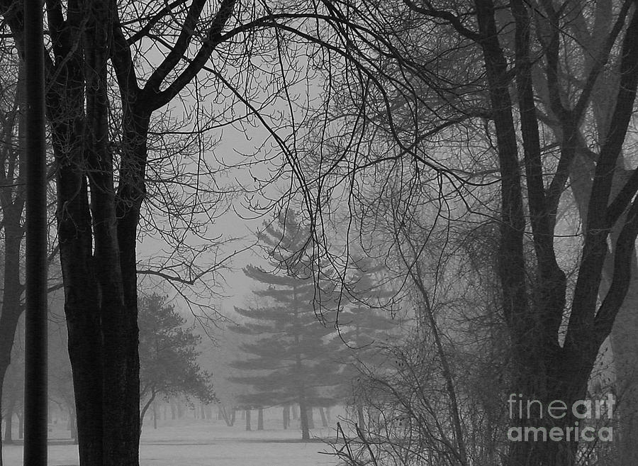 Fog Photograph - Fog At Metro Beach by Chris Fleming