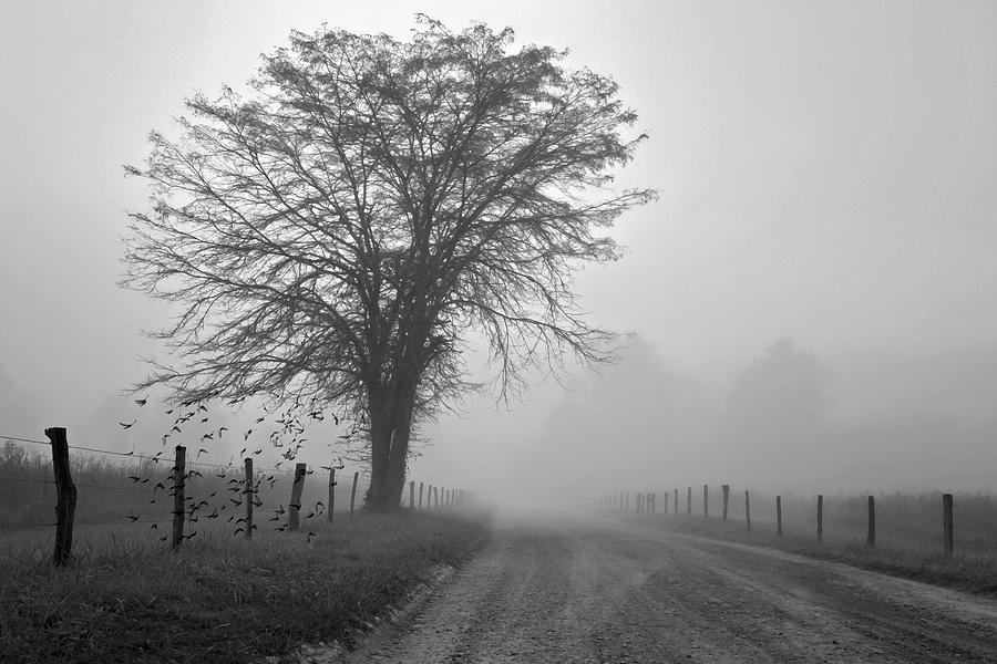 Bw Digital Art - Fog Covered Lane by Lana Trussell