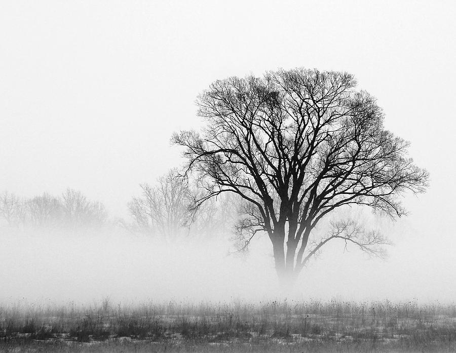 Tree Photograph - Fog by Elizabeth Reynders