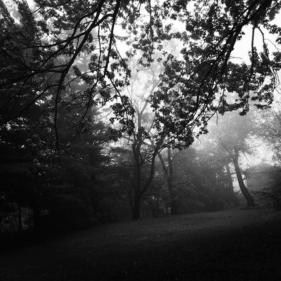 Monochrome Photograph - Fog In The Trees by Frank J Casella