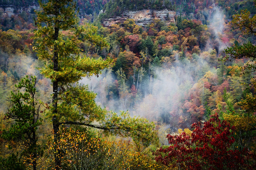Color Photograph - Fog In The Valley by Diana Boyd