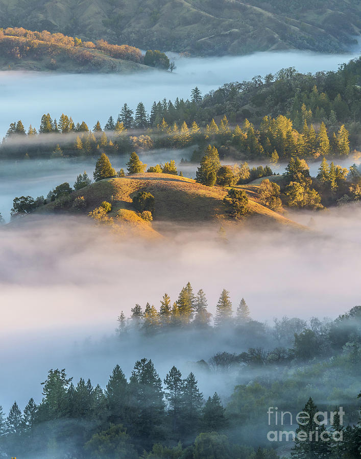 Fog in the Valley on the Sonoma Coast of California by Daniel Ryan