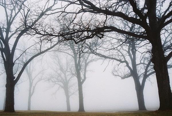 Fog Photograph - Fog Line by Rochelle Kassens