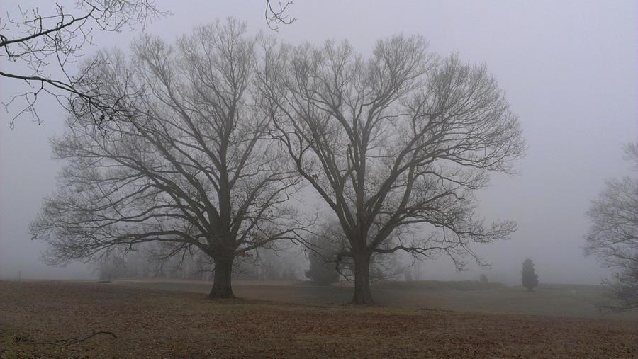 Fog Photograph - Fog on the Yorktown Battlefield by Liza Eckardt