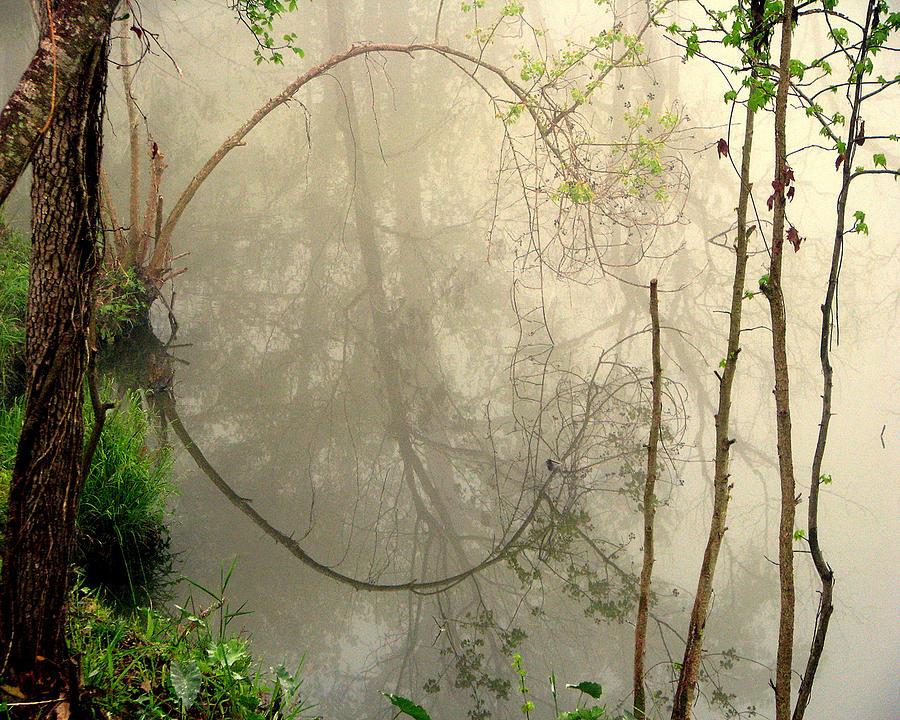 Fog Photograph - Fog Reflections by Dottie Dees