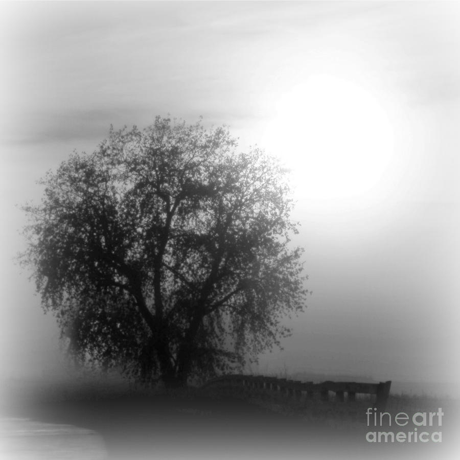 FOG TREE by Barbara Henry