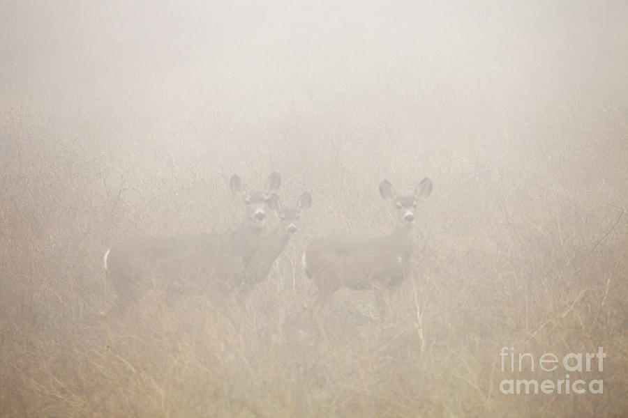 Deer Photograph - Foggy Eyes by Greg Clure