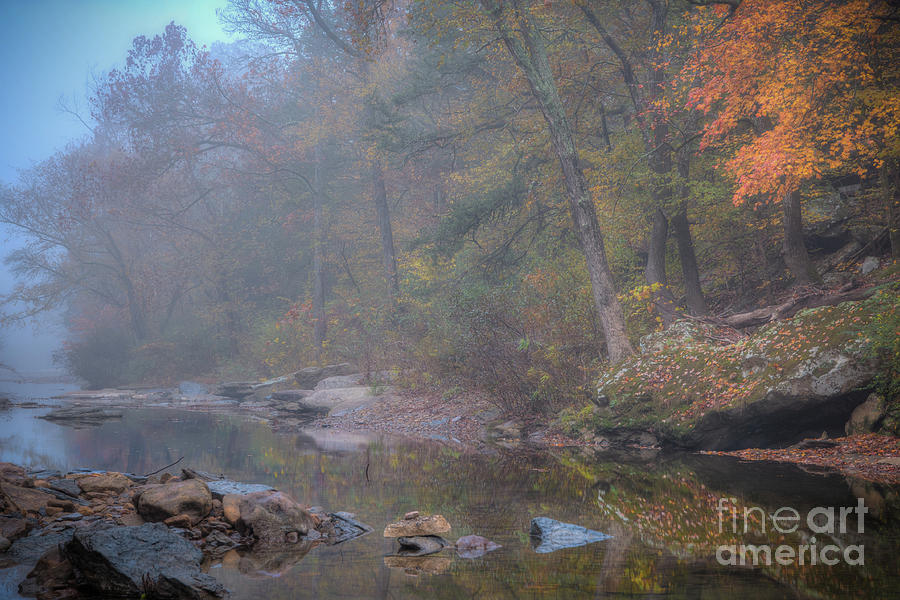 Foggy Fall by Larry McMahon