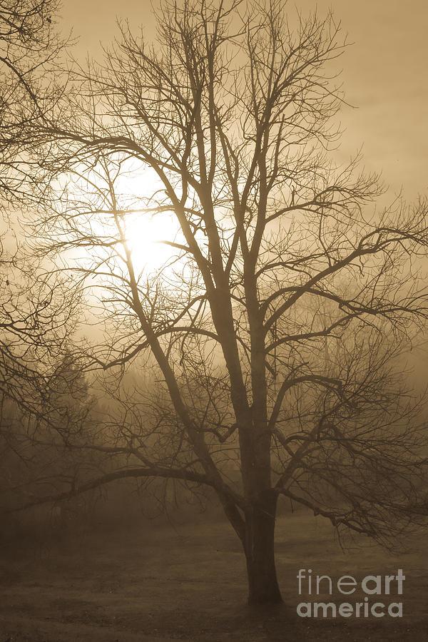 Foggy Fall Morning by Glenn Gordon