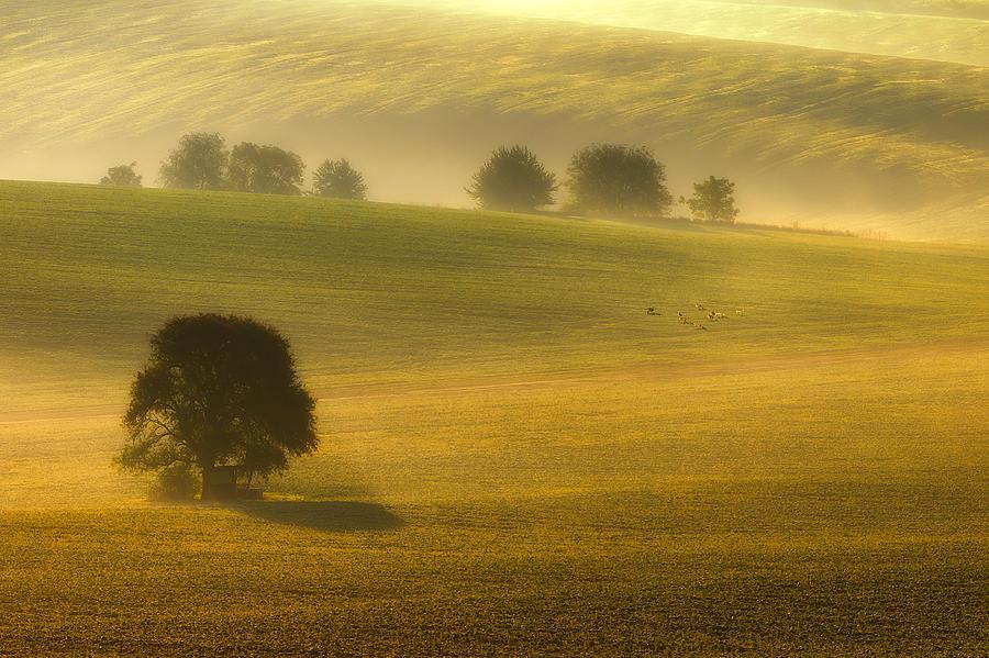 Bax Photograph - Foggy Fields by Piotr Krol (bax)