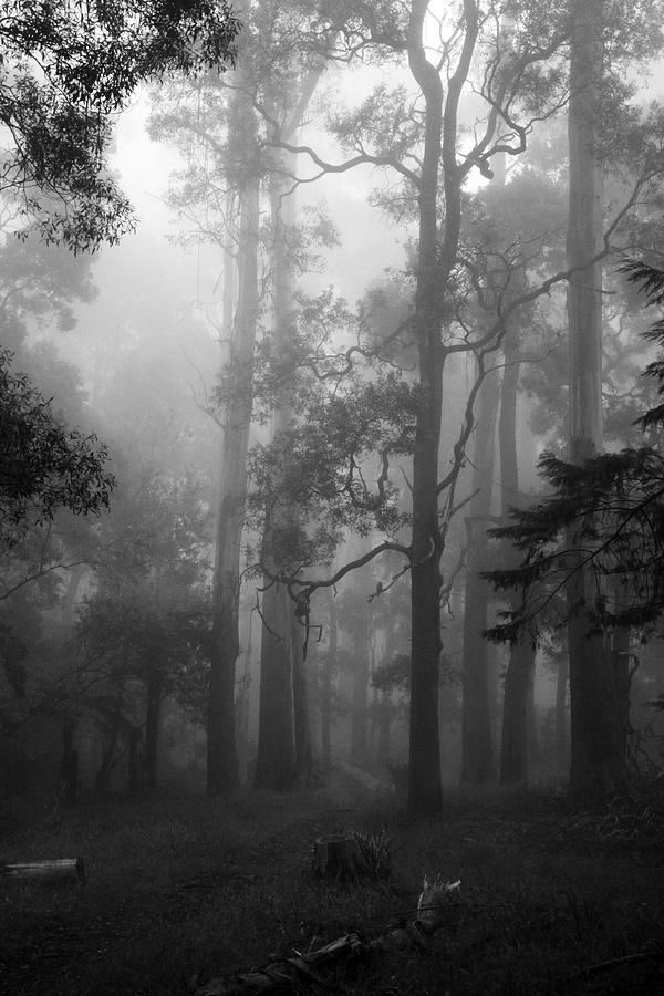 Forest Photograph - Foggy Forest by Lois Romer
