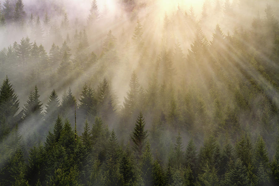 Sunlight Photograph - Foggy Forest by William Freebilly photography